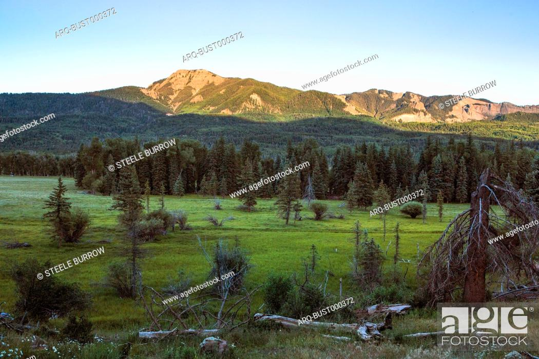 Imagen: Green forest of Blanco Basin in San Juan Mountains at dusk, Colorado, USA.