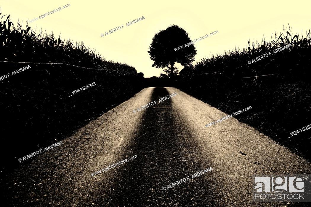 Stock Photo: Lone tree in a way, Llanes, Asturias, Spain. Sepia image.