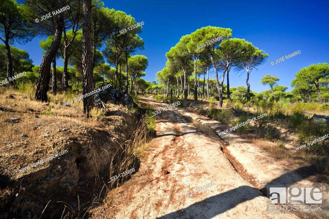 Stock Photo: Road in the Concejo pinewood Cadalso de los Vidrios Madrid Spain.