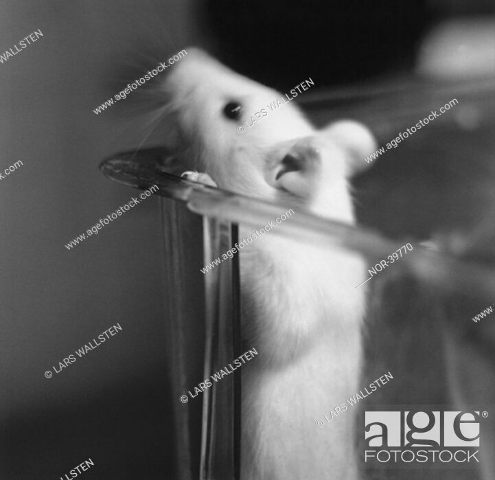 Stock Photo: A little mouse in a glass.