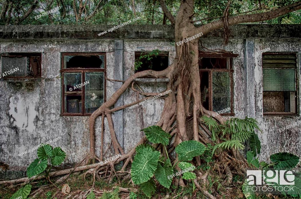 Stock Photo: An old weathered abandon residence in the forests on Lantau island,Hong Kong.