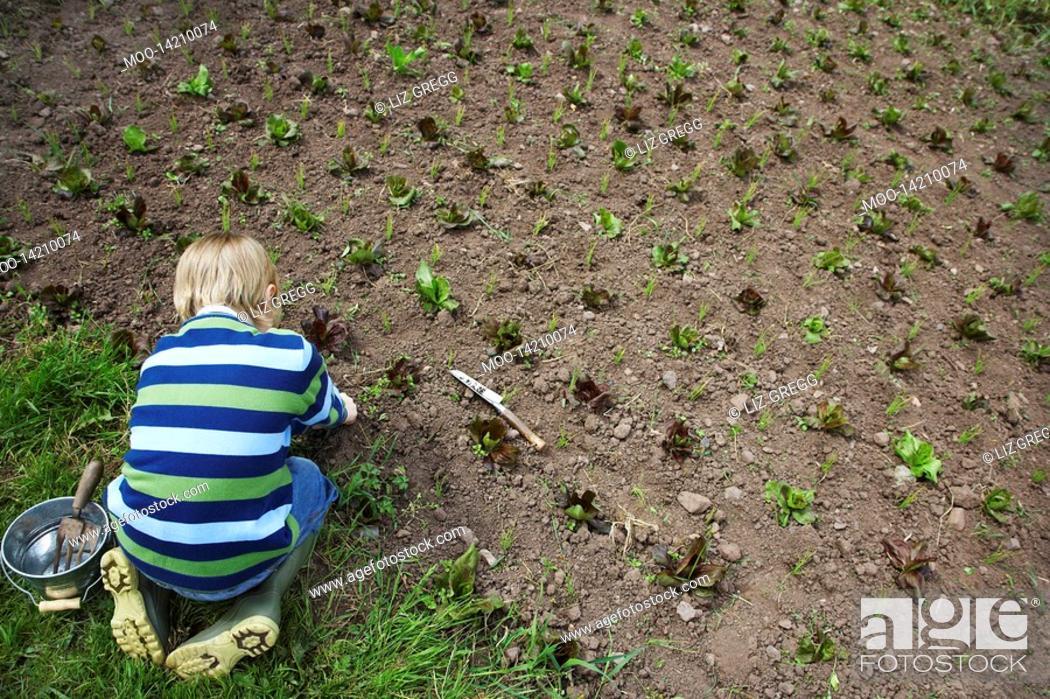 Stock Photo: Boy 5-6 planting crops in field.