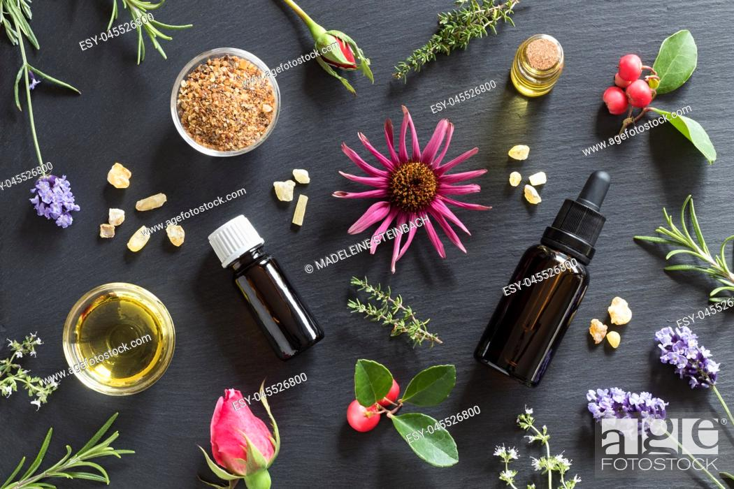 Stock Photo: Bottles of essential oil with rosemary, thyme, creeping thyme, echinacea, wintergreen, lavender, myrrh, frankincense and rose buds on a dark background.