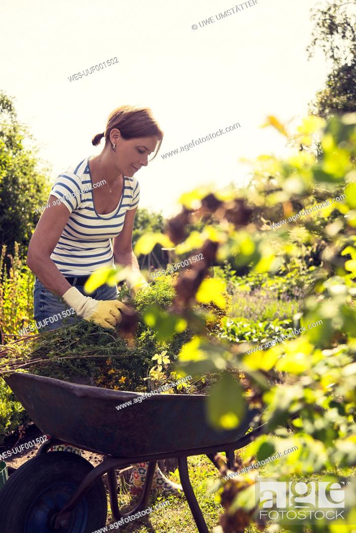 Stock Photo: Mature woman gardening.