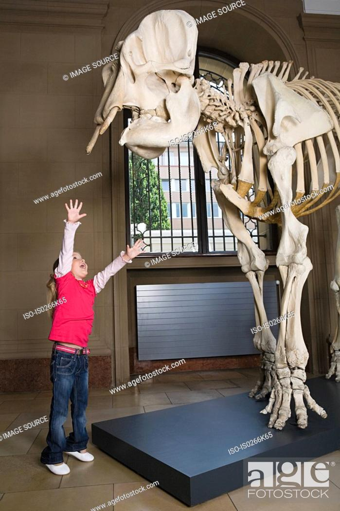 Stock Photo: Girl reaching for an elephant skeleton.