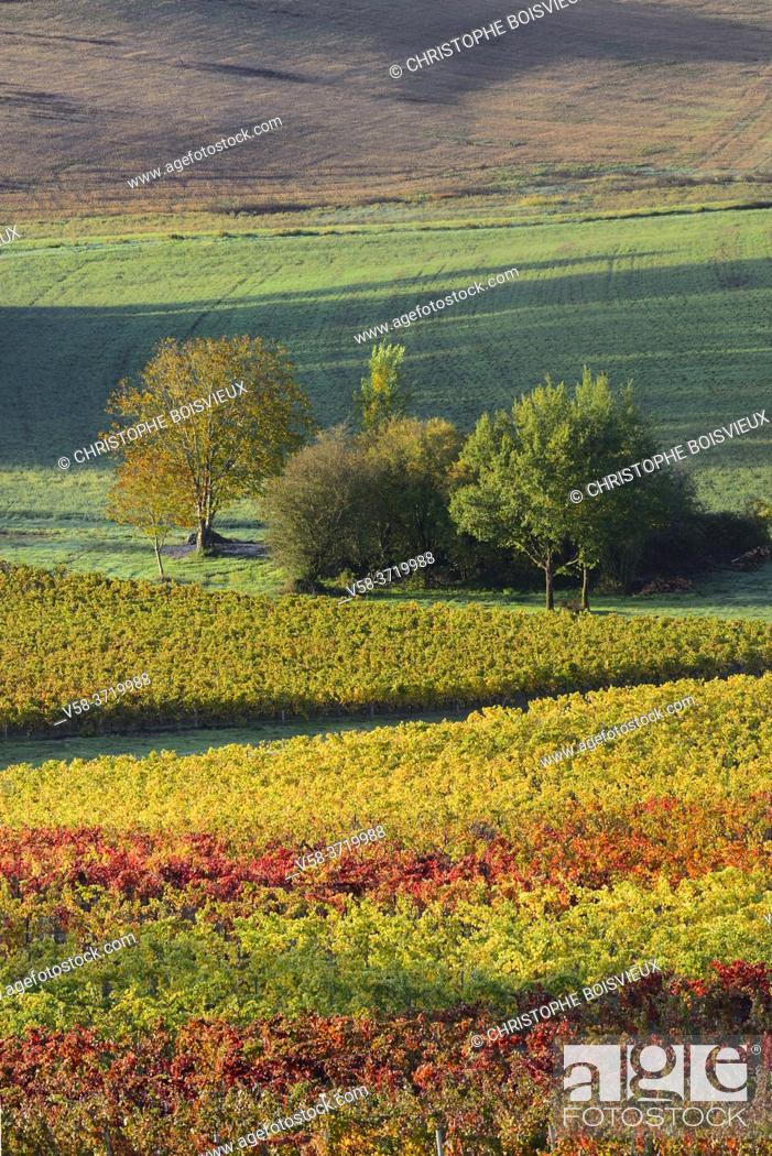 Stock Photo: France, Tarn, Lisle sur Tarn, Gaillac vineyard in autumn.
