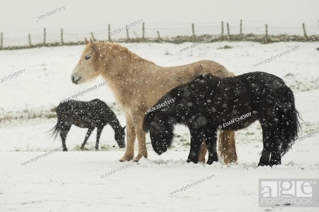 Stock Photo: Northern Scotland is hit by snow fall and below freezing temperatures as snow arrives as far south as Montrose Featuring: Atmosphere Where: Montrose.