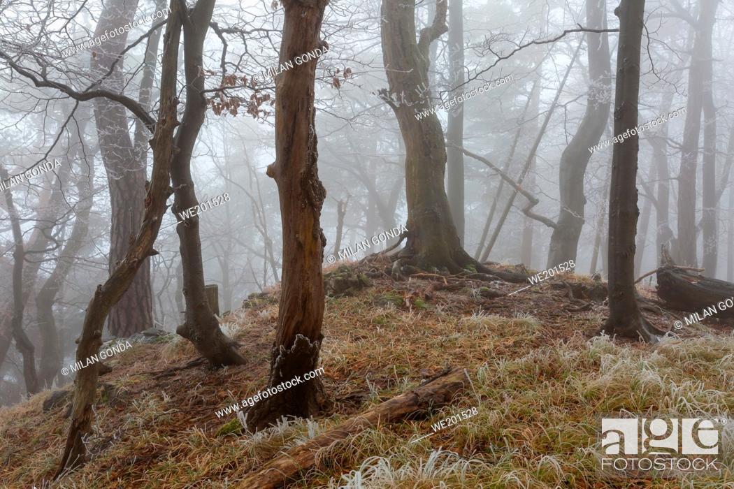 Stock Photo: National park of Velka Fatra in northern Slovakia.