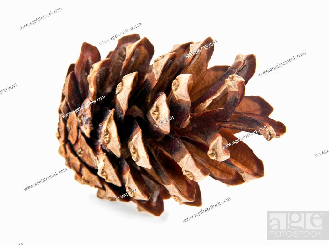 Stock Photo: cone is isolated on a white background.