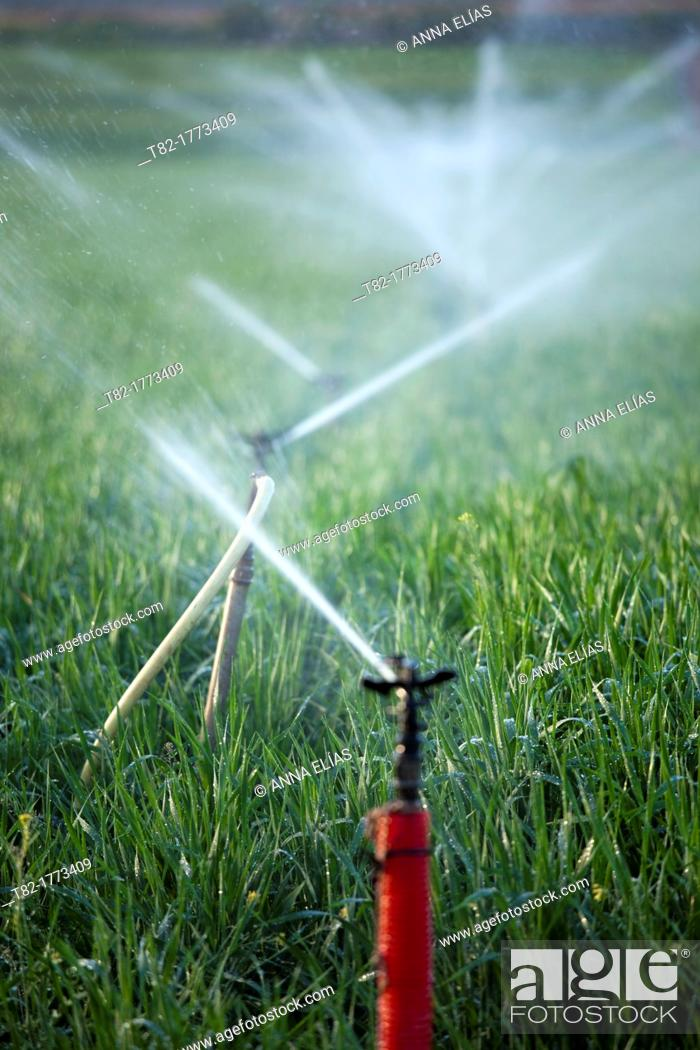 Stock Photo: Sprinklers watering a field of cereals, Cordoba, Andalusia, Spain, Europe.