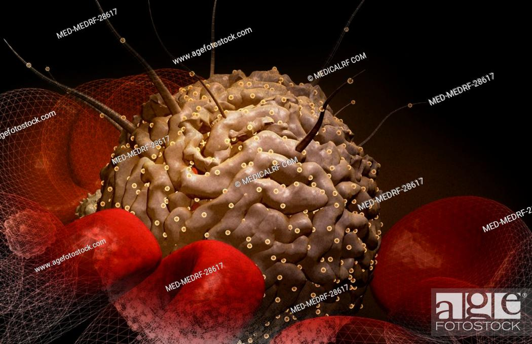 Stock Photo: Stem cells.