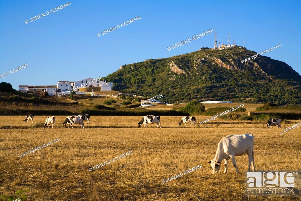 Stock Photo: Toro mountain. Landscape in Cami d'en Kane. Menorca. Balearic Islands. Spain. Monte Toro.