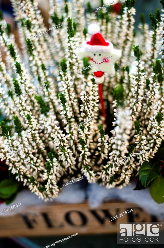 stock photo christmas decorations for sale in a plant nursery lombardy italy