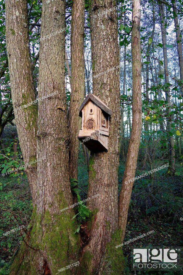 Stock Photo: Bird house. Winkworth Arboretum. National Trust. Godalming. Surrey. England.