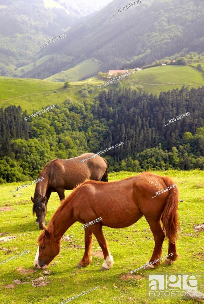 Stock Photo: Horses, Endoia, Zestoa, Guipuzcoa, Basque Country, Spain.