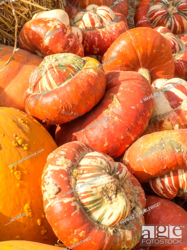 Stock Photo: Turban Squash has colors that vary from bright orange, to green or white. It has golden-yellow flesh and its taste is reminiscent to hazelnut.