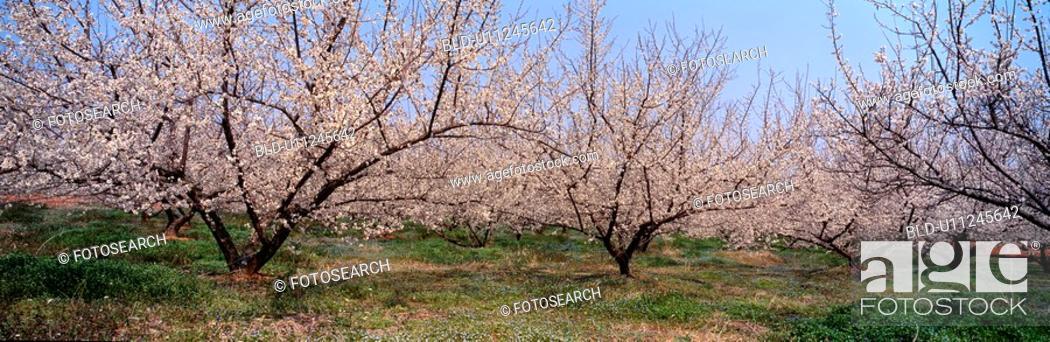 Stock Photo: panoramic view, landscape, spring, season, scenery, panorama, nature.