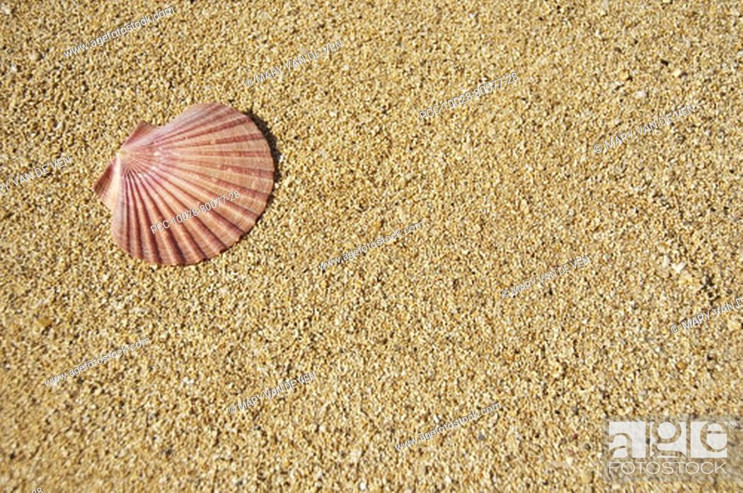 Stock Photo: Flat half of pink scallop shell on sand in the upper left corner.