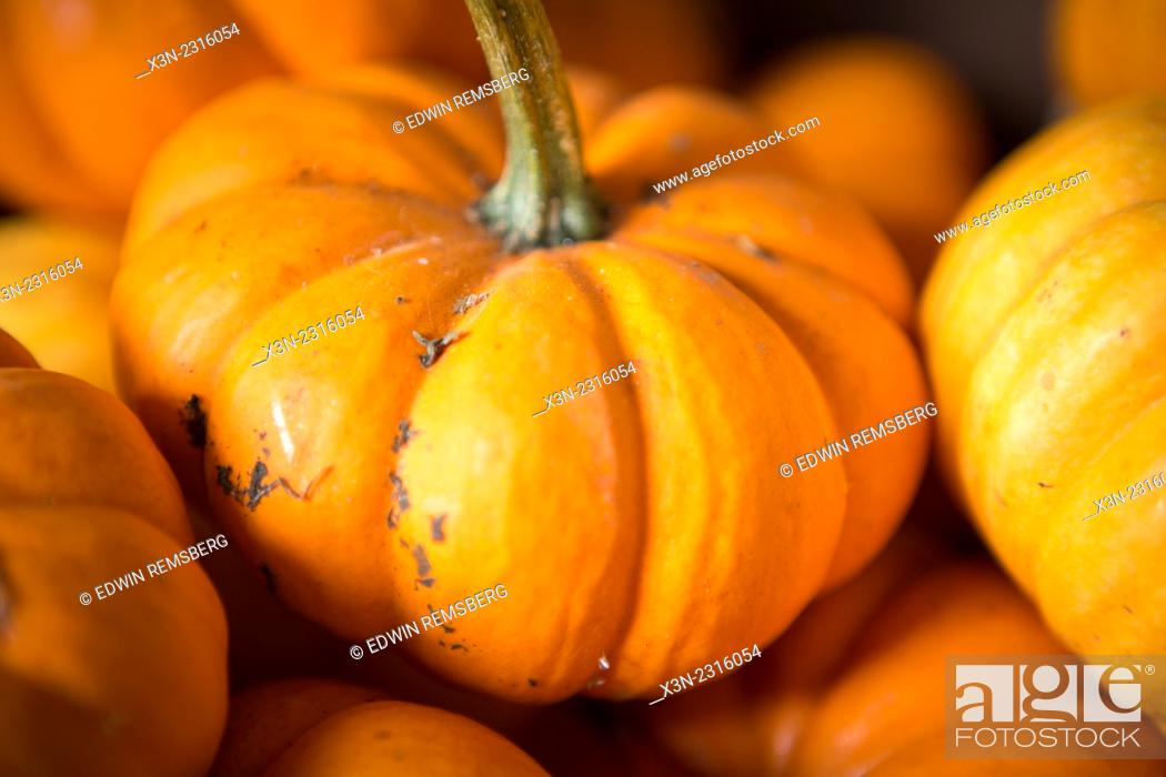 Stock Photo: Close-up of a small pumpkin in Fallston, Maryland, USA.