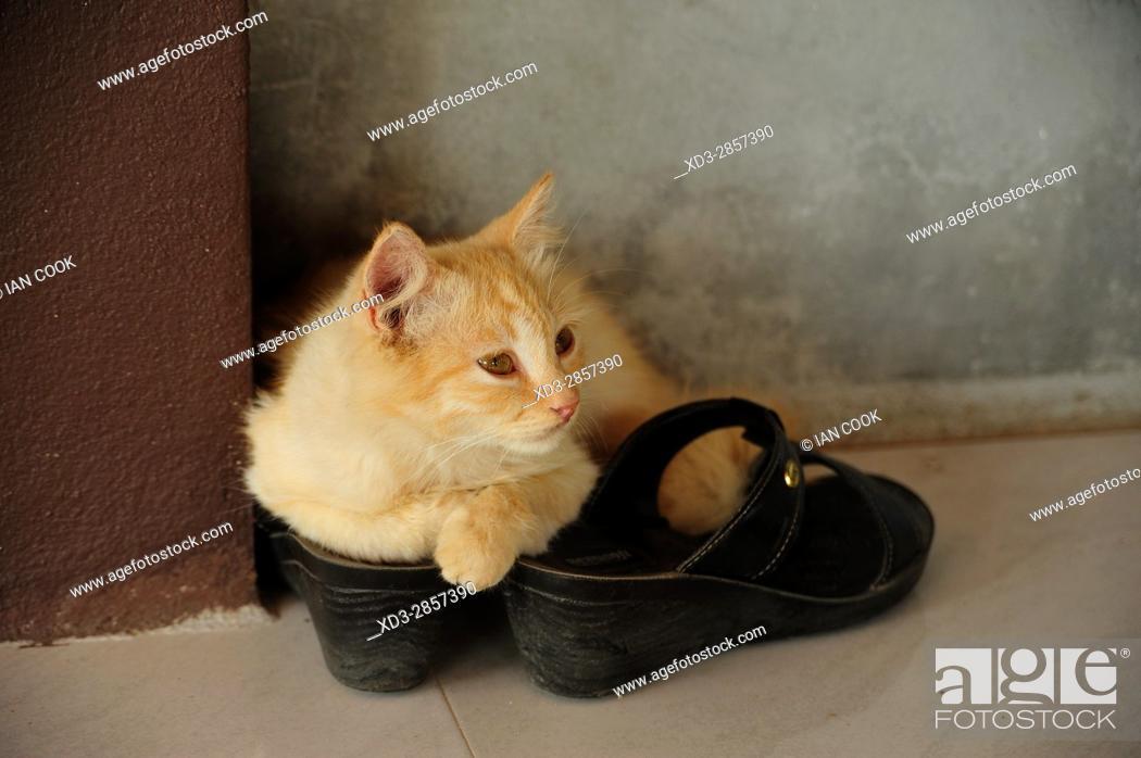 Stock Photo: kitten on a shoe, Krabi LIfe Homestay, Khlong Phon, Krabi, Thailand.
