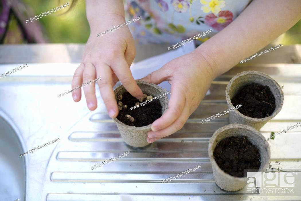 Stock Photo: Girl's hands planting seeds in small pots on table at garden.
