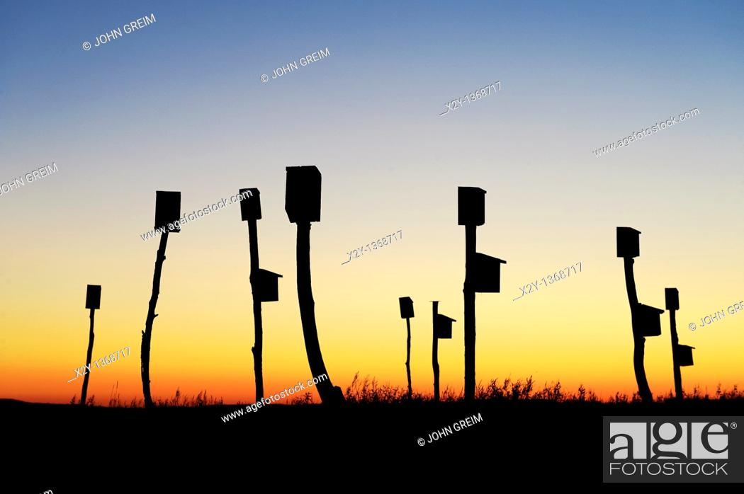 Stock Photo: Birdhouses placed in a salt marsh, Sandwich, Cape Cod, MA, Massachusetts.