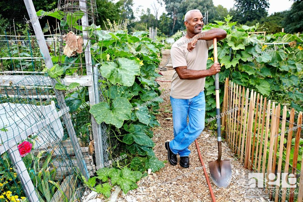 Stock Photo: Black man leaning on shovel in community garden.