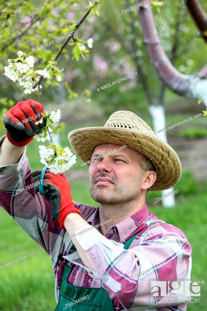 Stock Photo: Russia. Belgorod region. Spring work in the orchard.