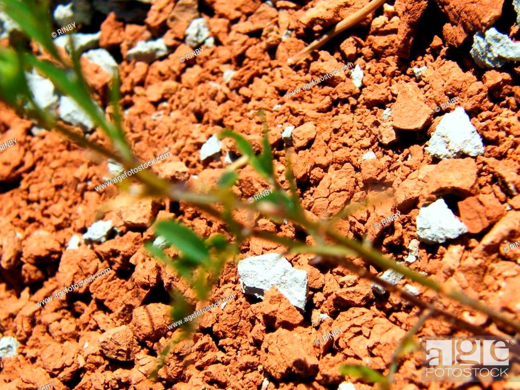 Stock Photo: The picturesque combination of white and red clay, dry and cracked.