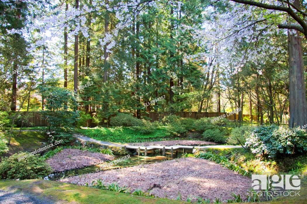 Stock Photo - Nitobe Memorial Garden, A Traditional Japanese Tea And Stroll Garden Located At The University Of British Columbia, Vancouver, ...
