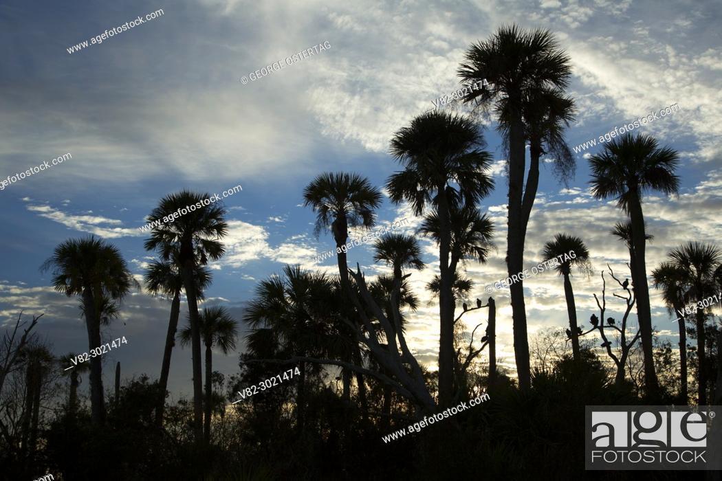 Imagen: Palm silhouette, Orlando Wetlands Park, Florida.