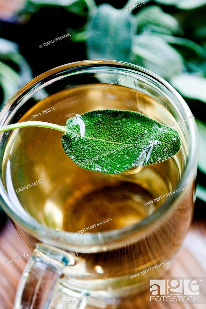Stock Photo: Sage herbel tea.