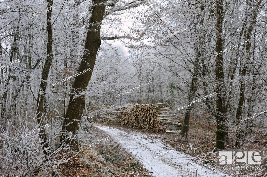 Stock Photo: path in the Forest of Rambouillet, Haute Vallee de Chevreuse Regional Natural Park, Yvelines department, Ile de France region, France, Europe.