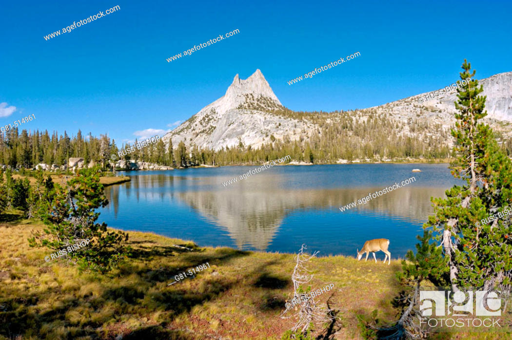 Stock Photo: Cathedral Peak from the shore of upper Cathedral Lake (deer visible), Yosemite National Park, California.