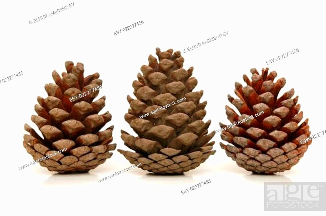 Stock Photo: Three pine cones isolated on white background.