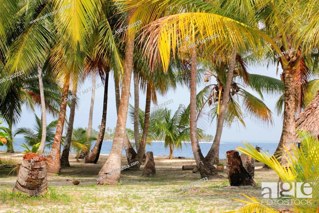 Imagen: Seaside palm grove on the sandy beach of San Blas Islands, Panama, Central America.