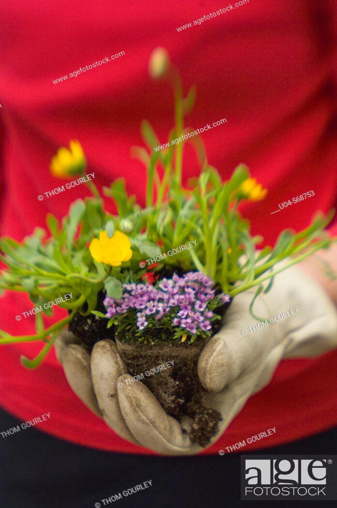 Stock Photo: Gardener's hand ready to plant mixed flower starts.