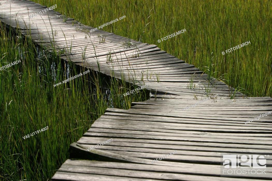 Stock Photo: crops, vegetation, wild, bridge, walkway, path.