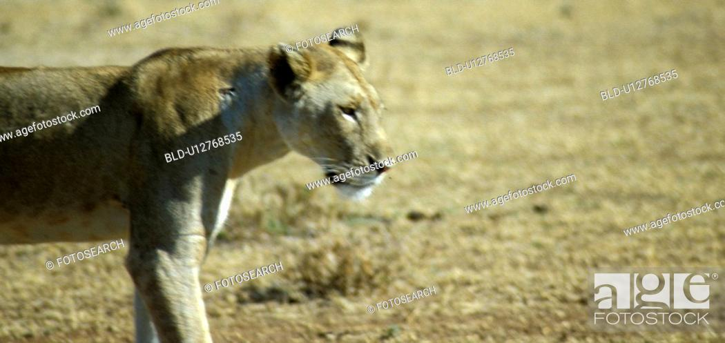 Stock Photo: Africa, animals, andreas, African, africa.