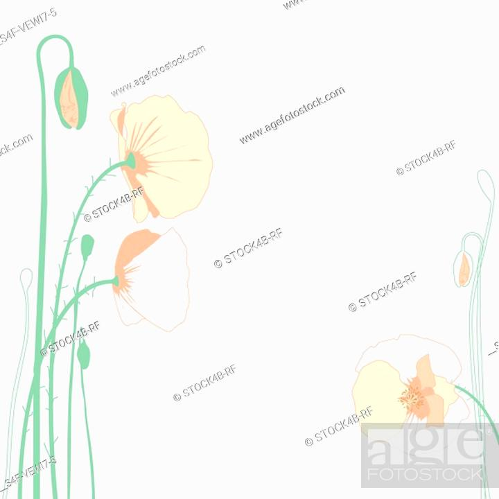 Stock Photo: Illustration of corn poppy.