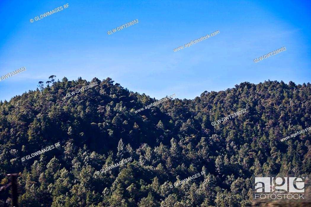 Stock Photo: Trees on a hill, San Cristobal De Las Casas, Chiapas, Mexico.