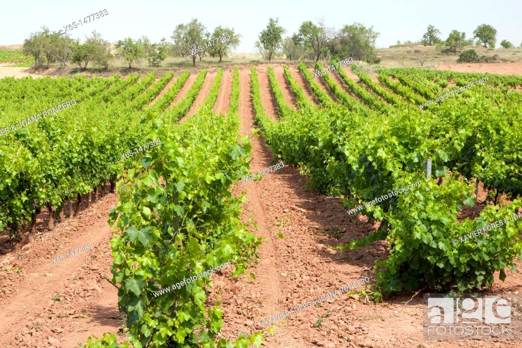 Stock Photo: Vineyard near San Millán de la Cogolla , La Rioja, Spain.