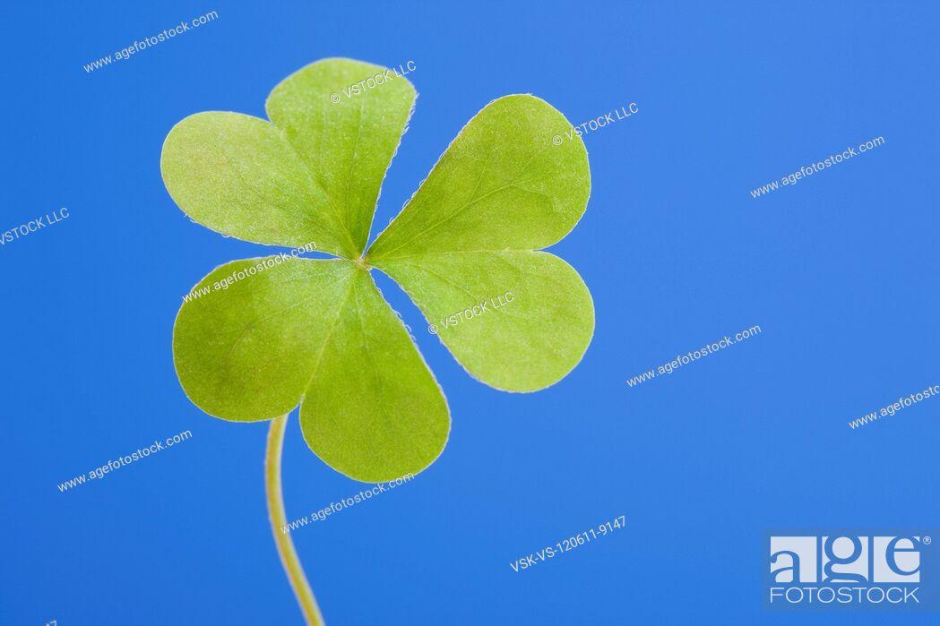 Imagen: USA, Illinois, Metamora, Close-up of clover.