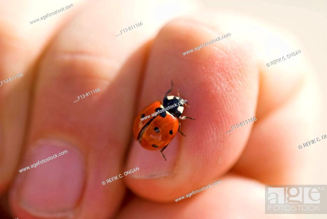 Stock Photo: ladybird on finger.