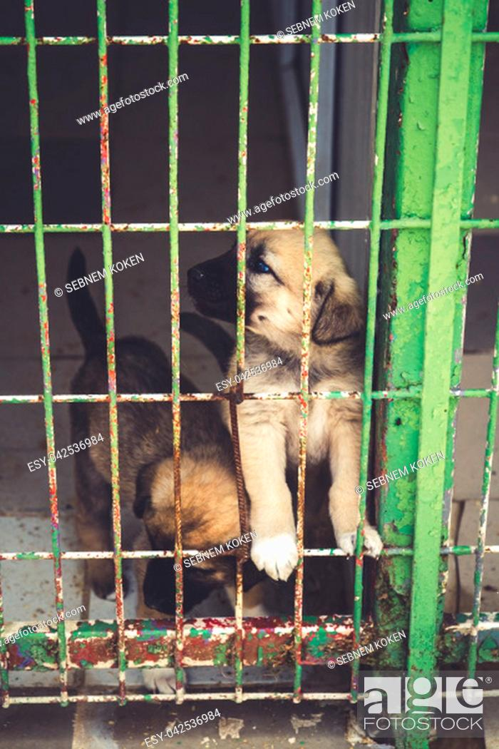 Photo de stock: Street dogs in dog shelter waiting to be owned.