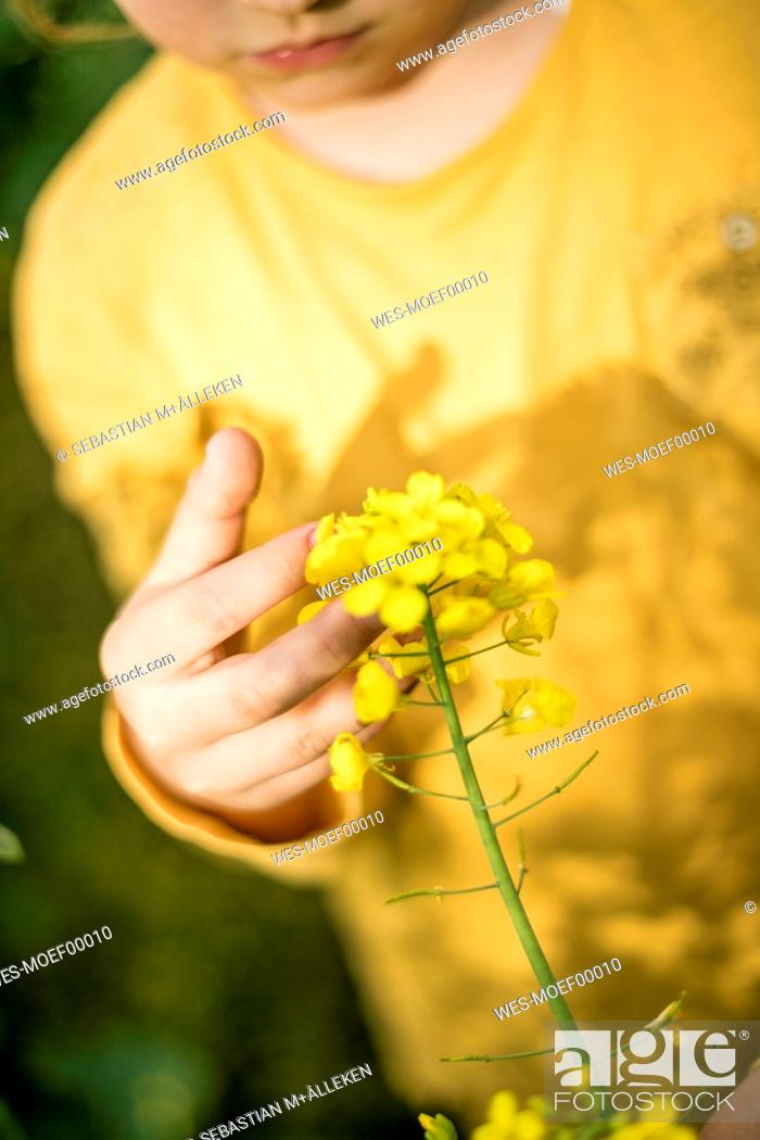 Stock Photo: Close-up of girl examining plant in rape field.