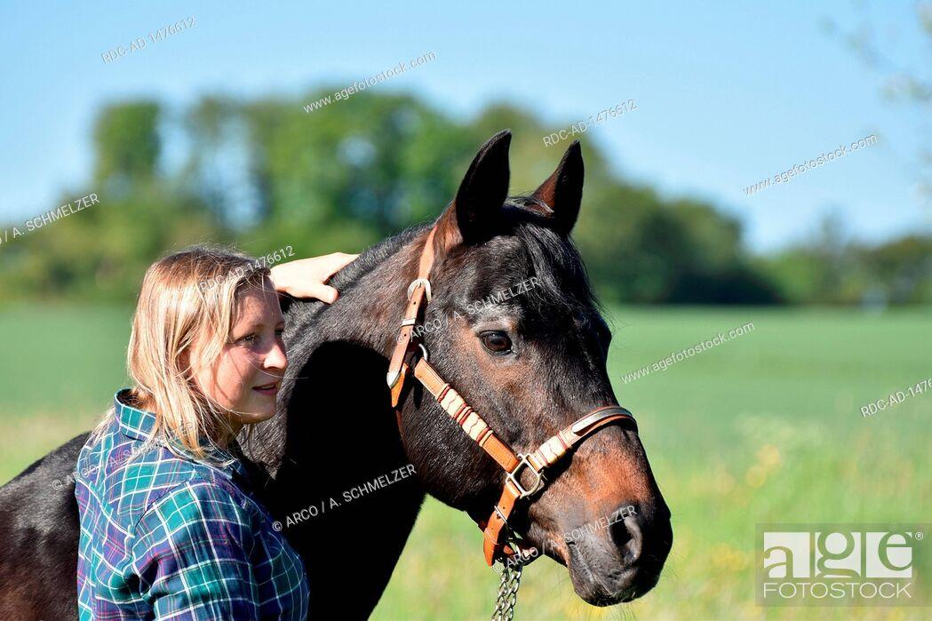 Stock Photo: Woman with American Quarter Horse, Stallion, stud stallion, breeding stallion, old horse, 27 years of age.