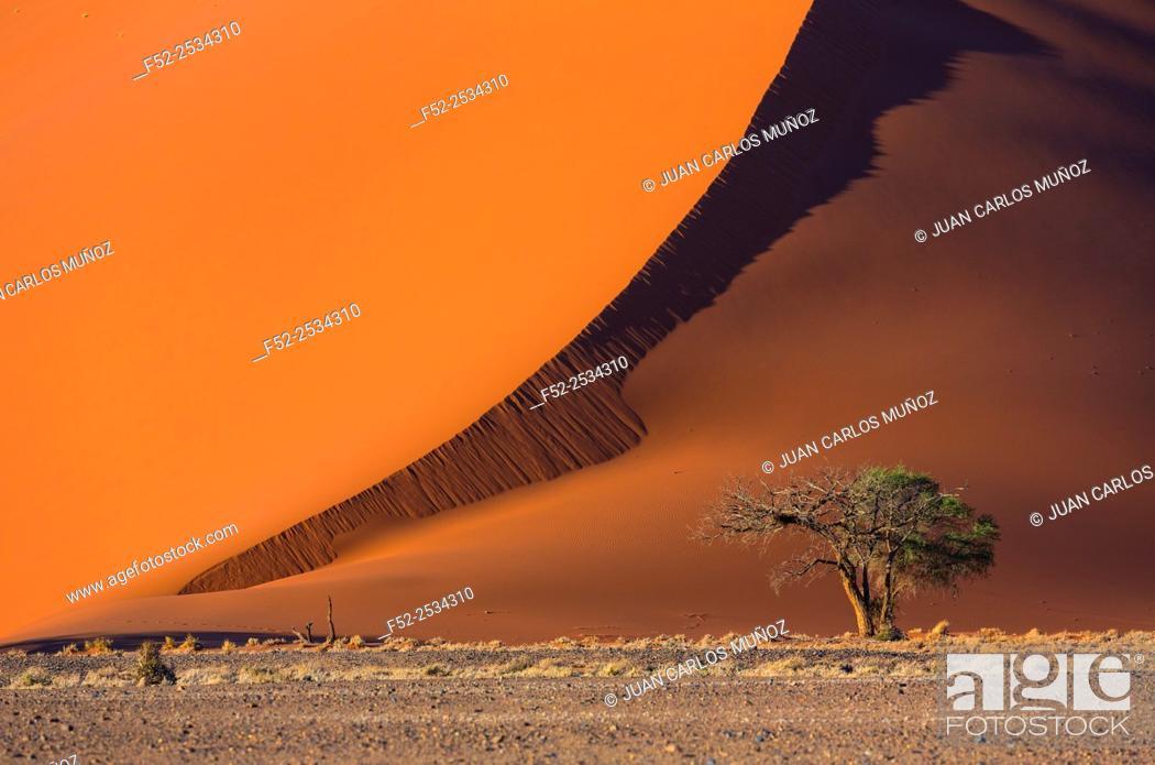 Imagen: Sand dune in desert, Namib Naukluft National Park, Namibia.
