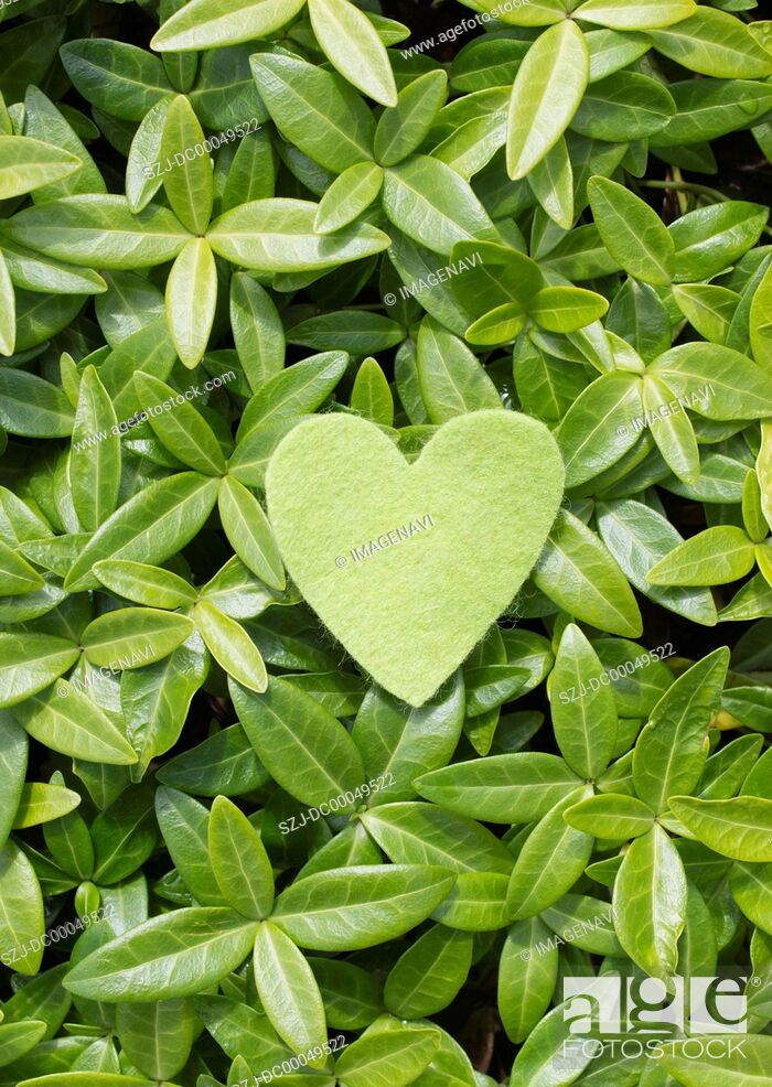 Stock Photo: Leaves and heart-shaped felt.
