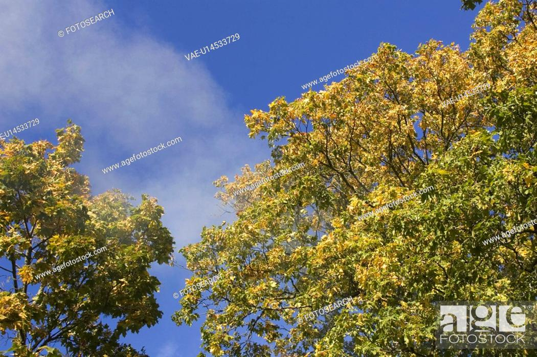 Stock Photo: Branch, Green, Day, Cloud, Autumn.